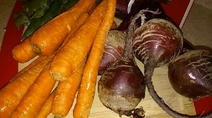CARROTS AND BEET ROOTS